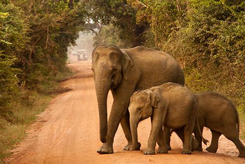 Découvrez le Parc national de Yala au Sri Lanka, idéal pour les safaris