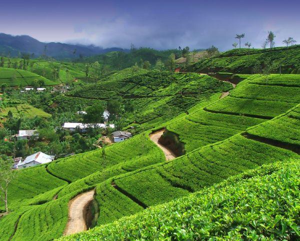 Les meilleures activités à faire lors d'un séjour au Sri Lanka