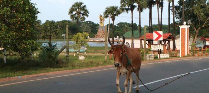 Ce qu'il faut savoir avant de se rendre au Sri Lanka